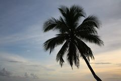 Single palm tree at sunset Royalty Free Stock Images