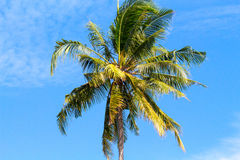 Single palm tree top in sky. Sunny day in tropical island. Exotic nature scenery. Coconut palm photo for banner template with text place. Sunshine and cloudy Royalty Free Stock Photos