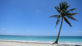 Single Palm tree on tropical caribbean beach in Dominican Republic. Single Palm tree on tropical caribbean beach in Punta Cana, Dominican Republic Stock Images
