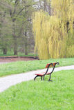 Single park bench with footpath and willow tree Stock Image