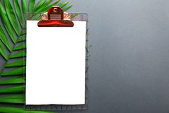 Single parlor palm leaf with notebook page on grey gradient background. Clipboard with blank piece of paper on big green leaf of parlor palm white grey gradient stock photo