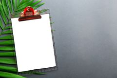 Single parlor palm leaf with notebook page on grey gradient background. Clipboard with blank piece of paper on big green leaf of parlor palm white grey gradient royalty free stock images
