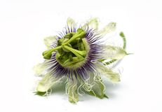 Passion fruit flower on a white background Stock Photos