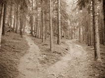 A single path splits in two different directions. Vintage effect Stock Image