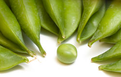 Single pea and pods. Close-up of one pea against pods isolated on white Stock Photography
