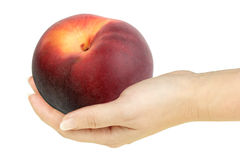 Single peach in a hand of woman. Isolated on white background. Close-up. Studio photography royalty free stock photo