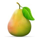 Single pear fruit close up Stock Image
