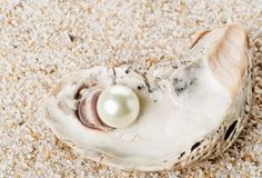 Single pearl in oyster sea shell on sand Royalty Free Stock Images