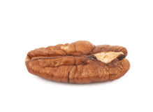 Single pecan nut isolated Stock Images