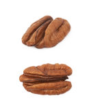 Single pecan nut isolated Stock Photography