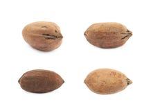 Single pecan nut  Royalty Free Stock Photos