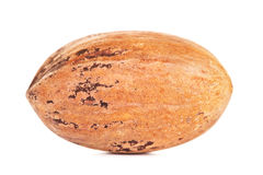Single Pecan Nut In A Shell Stock Image