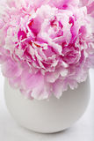 Single peony flower in white vase Royalty Free Stock Photos