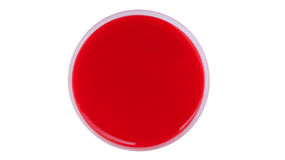 Single petri dish - Columbia blood agar. An agar plate is a Petri dish that contains a growth medium (typically agar plus nutrients) used to culture Stock Image