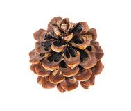Single pine cone, isolated Royalty Free Stock Image