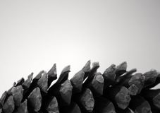 Single Pine Cone profile isolated grey background Royalty Free Stock Photography