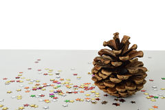 Single pine cone Royalty Free Stock Photos