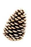Single pine tree cone Stock Photo