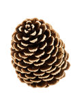 Single pine tree cone Stock Images
