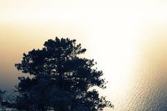 Single pine tree against sparkled sea royalty free stock photos