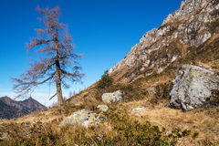 Single pine tree in the mountains Royalty Free Stock Photography
