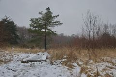 Single pine tree and wooden bridge on heathland countryside after snow stock images