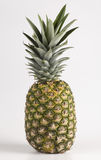 Single Pineapple. Photograph of a single pineapple on a white background royalty free stock photos