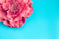 Single pink chrysanthemum flower on light blue background. Spring gretting card copy space Stock Image