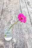 Single pink gerbera flower in the clear glass jar Stock Images