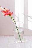 Single pink gladiolus in a glass vase with water isolated on whi Stock Photos
