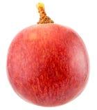 Single Grape Isolated ...