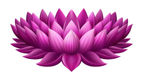 Single Pink lotus Stock Photo