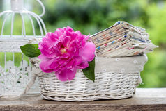 Single pink peony flower and pile of letters. In white wicker basket on rustic wooden table in lush spring garden royalty free stock photography