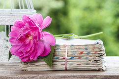 Single pink peony flower on stack of letters. Copy space stock photos