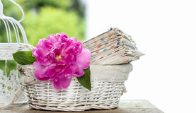 Single pink peony flower on stack of letters. Copy space stock photography