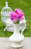 Single pink peony flower in white ceramic vase Stock Photos
