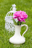 Single pink peony flower in white ceramic vase. On fresh green lawn in the garden Stock Photos