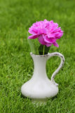 Single pink peony flower in white ceramic vase. On fresh green lawn in the garden Royalty Free Stock Photos