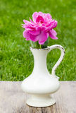 Single pink peony flower in white ceramic vase Royalty Free Stock Image