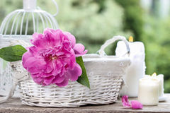 Single pink peony flower in white wicker basket Royalty Free Stock Photography