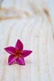 Single pink plumeria on wood floors. Single pink plumeria on wood floors Stock Images