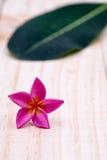 Single pink plumeria on wood floors. Single pink plumeria on wood floors Royalty Free Stock Photos