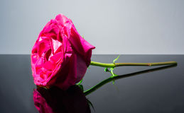 Single pink rose alone, arrangement, beauty Royalty Free Stock Image