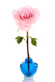 Single pink rose in blue vase Stock Photo