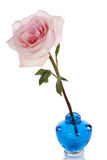 Single pink rose in blue vase Royalty Free Stock Photo