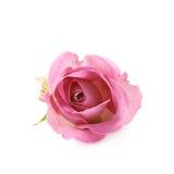 Single pink rose bud  Stock Photos