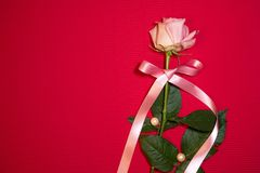 A single pink rose with a pink ribbon stock photo