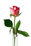 Single pink rosebud in glass vase on white background. stock photo