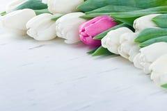 Single pink tulip among white tulips Stock Photo