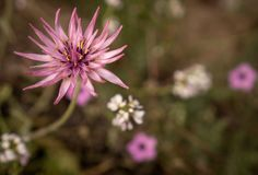 A pink wildflower in the field stock photography